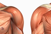 Shoulder-or-Deltoid